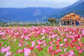 花東縱谷。油菜花:IMG_12472-38.jpg