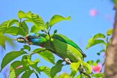 綠繡眼。:IMG_14240.jpg