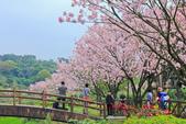 櫻。三生步道:IMG_8391.jpg