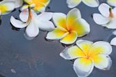 雞蛋花。:IMG_9481.jpg
