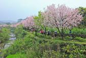 櫻。三生步道:IMG_8406.jpg