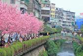 櫻。希望之河:IMG_8344.jpg