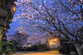 櫻。東方寺:IMG_8462.jpg