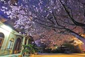 櫻。東方寺:IMG_8467.jpg
