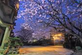 櫻。東方寺:IMG_8464.jpg