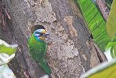 五色鳥。:IMG_10239.jpg