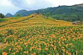 六十石山の金針花季。:IMG_10515.jpg