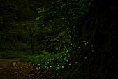 夜。螢火蟲:IMG_9697.jpg