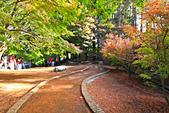 福壽山。松廬:IMG_5873.jpg