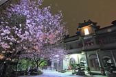 櫻。東方寺:IMG_8473.jpg