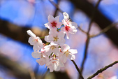 櫻。橘咖啡:IMG_12916.jpg