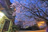 櫻。東方寺:IMG_8461.jpg