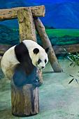 遊。木柵動物園:IMG_0024.jpg