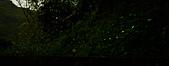 夜。螢火蟲:stackedImage5.jpg