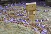 紫藤の恋。:IMG_3339.jpg
