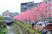 櫻。希望之河:IMG_8347.jpg