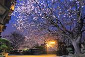 櫻。東方寺:IMG_8466.jpg