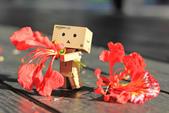 鳳凰花開。:IMG_9048.jpg