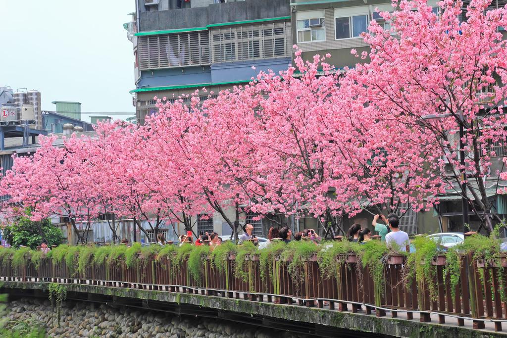櫻。希望之河:IMG_8349.jpg