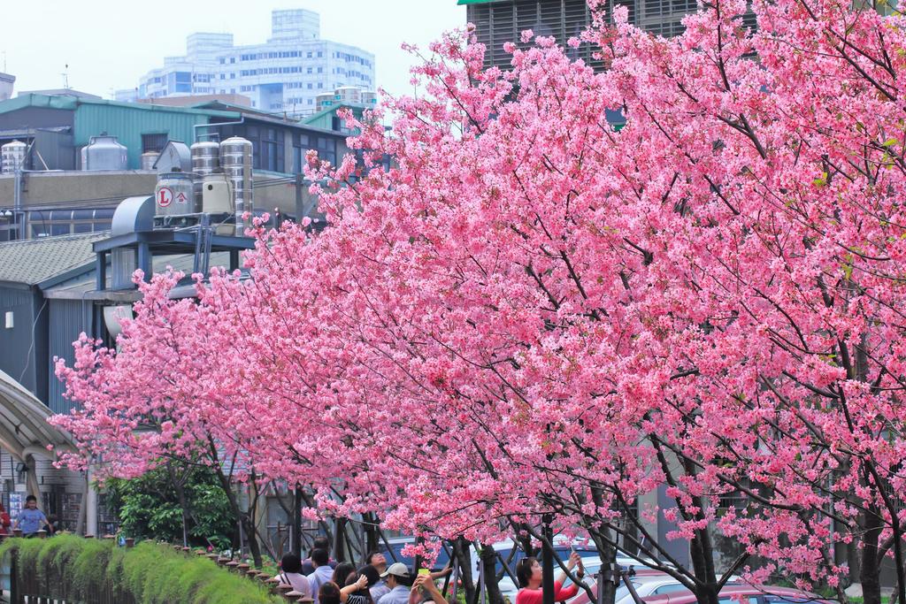 櫻。希望之河:IMG_8352.jpg