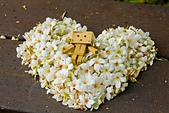 花。五月雪油桐花:IMG_0385.jpg