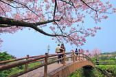 櫻。三生步道:IMG_8381.jpg