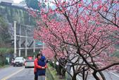 櫻。花園新城:IMG_7583.jpg