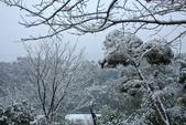 雪。陽明山:IMG_7246.jpg