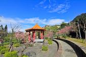 櫻。屈尺公園:IMG_7525.jpg