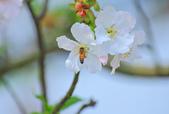 櫻。三生步道:IMG_8645.jpg