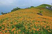六十石山の金針花季。:IMG_10520.jpg