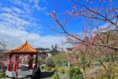 櫻。屈尺公園:IMG_7527.jpg