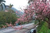 櫻。花園新城:IMG_7585.jpg