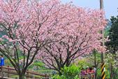櫻。三生步道:IMG_8385.jpg