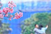 櫻。希望之河:IMG_8363.jpg