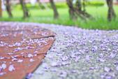 紫の浪漫。:IMG_8586.jpg