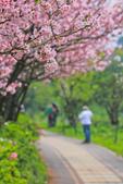 櫻。三生步道:IMG_8398.jpg