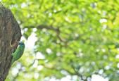 五色鳥。:IMG_10208.jpg