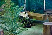 遊。木柵動物園:IMG_0030.jpg