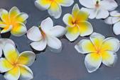 雞蛋花。:IMG_9480.jpg