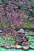 九族。櫻花季:IMG_46520.jpg
