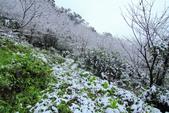 雪。陽明山:IMG_7236.jpg