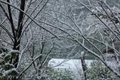 雪。陽明山:IMG_7244.jpg