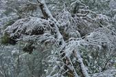 雪。陽明山:IMG_7247.jpg
