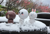 雪。陽明山:IMG_7188.jpg