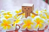 雞蛋花。:IMG_9474.jpg