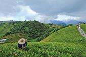 六十石山の金針花季。:IMG_10491.jpg