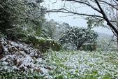 雪。陽明山:IMG_7252.jpg