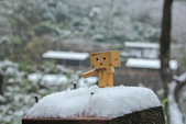 雪。陽明山:IMG_7204.jpg