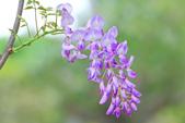 紫の浪漫。:IMG_8570.jpg